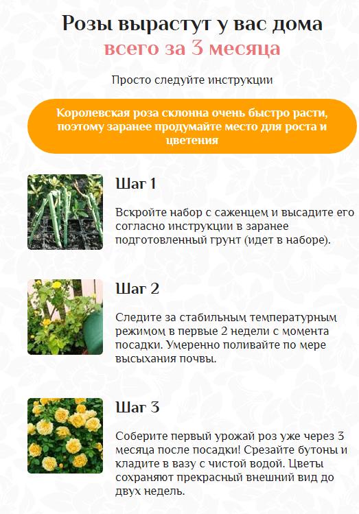 Инструкция по выращиванию Королевских гибридных роз